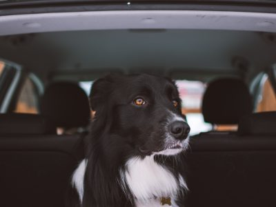 How to Keep Your Dog Safe and Properly Secured in Your Car
